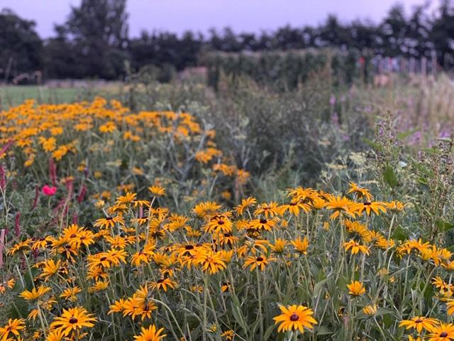 Vrijdag 2 en zaterdag 3 oktober bloementuin voor het laatst open